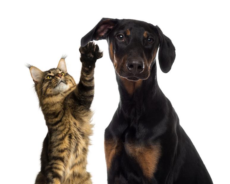 Gatto: educazione e comportamento
