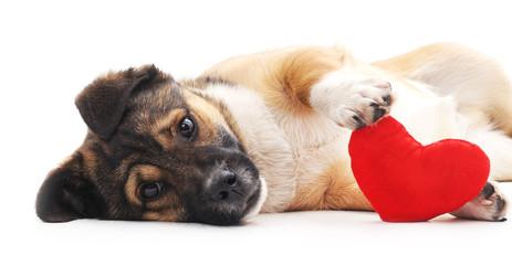 Il cane: come gestire un'emergenza (il colpo di calore)